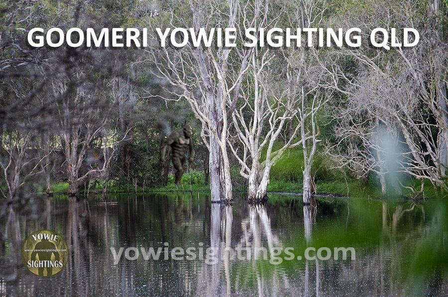Night Stalker Goomeri Yowie Sighting QLD